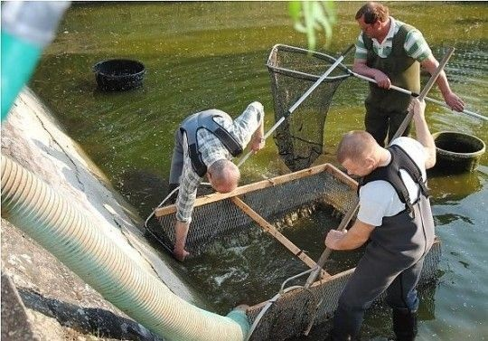 Das Wasser wird in einen Tankwagen abgepumpt. Die Helfer sorgen dafür, dass kein Unrat mit in den Schlauch gelangt.Foto: Walter Mogk