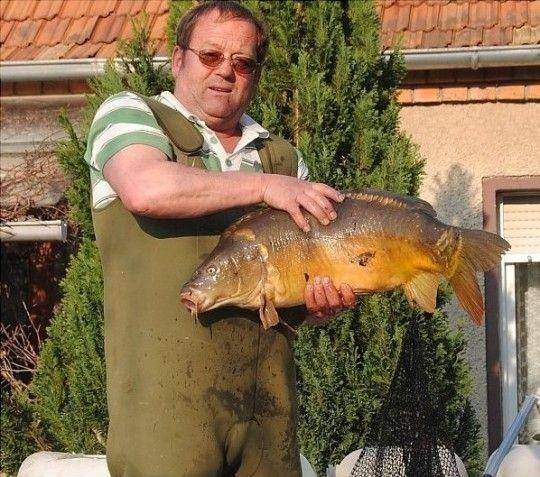 Nicht nur kleine Goldfische schwimmen im Teich. Werner Thiede holt beim Säubern einen mächtigen Karpfen heraus. Foto: Walter Mogk