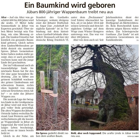 20200125 Altmark Zeitung - Jübar - 800-jähriger Wappenbaum treibt aus (Kai Zuber)